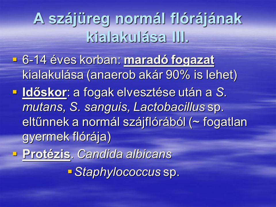 A szájüreg normál flórájának kialakulása III.