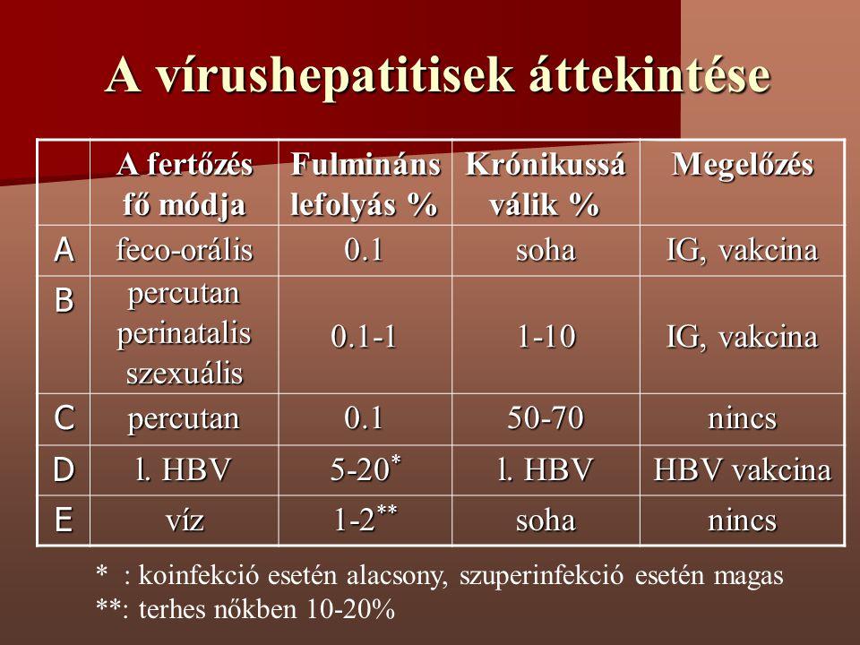 A vírushepatitisek áttekintése