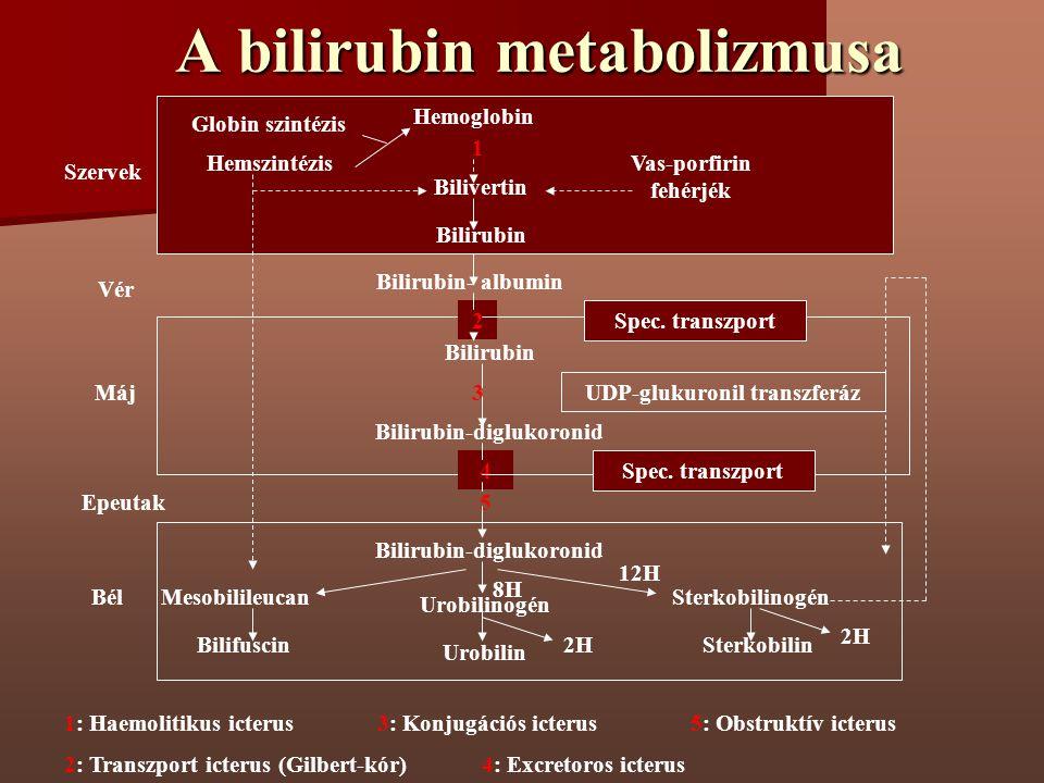 A bilirubin metabolizmusa