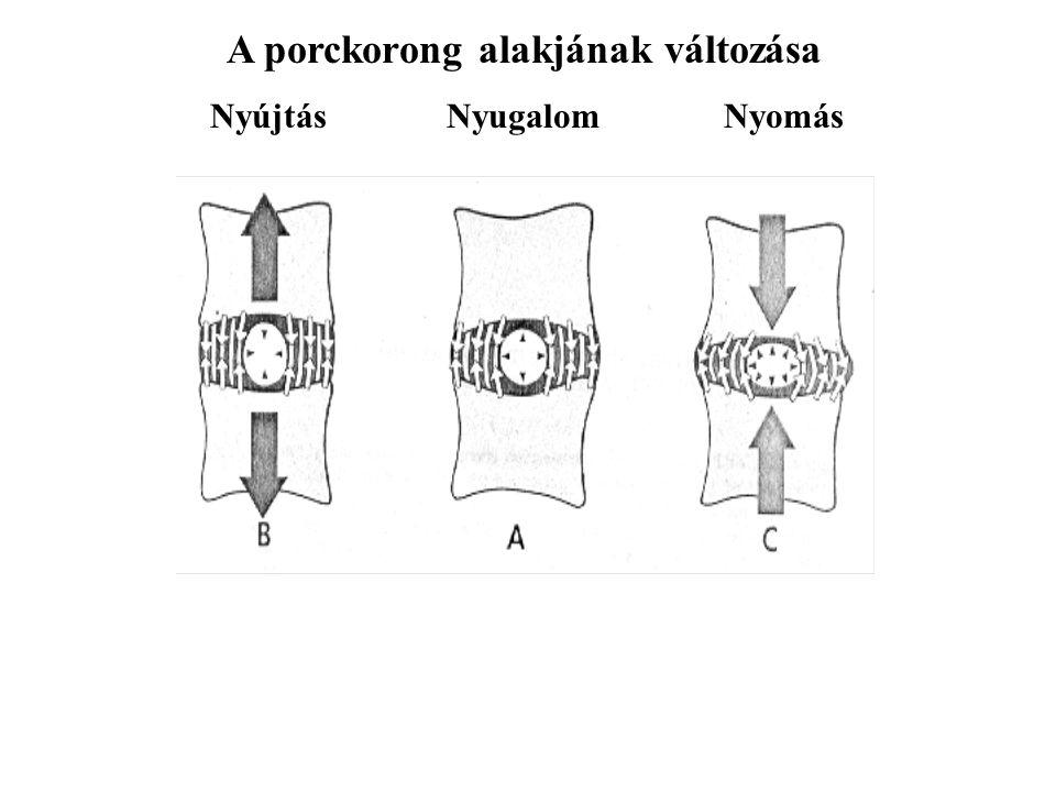 A porckorong alakjának változása