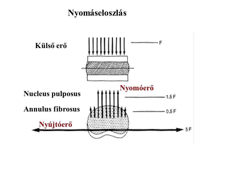 Nyomáseloszlás Külső erő Nyomóerő Nucleus pulposus Annulus fibrosus