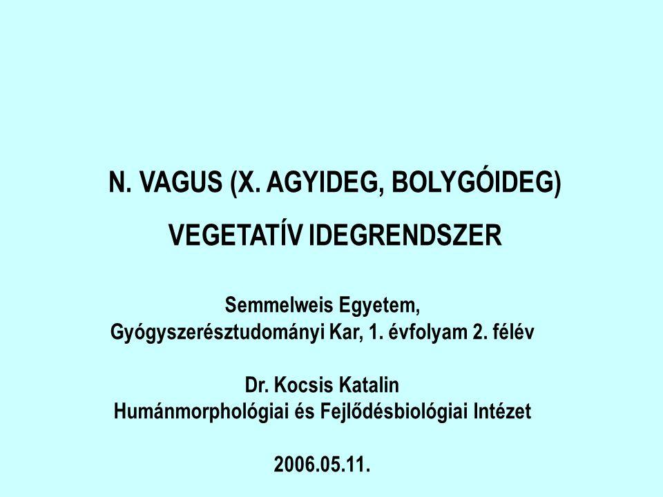 N. VAGUS (X. AGYIDEG, BOLYGÓIDEG) VEGETATÍV IDEGRENDSZER
