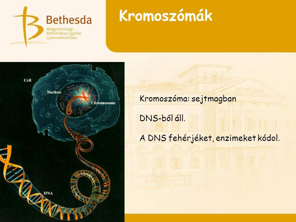 Kromoszómák Kromoszóma: sejtmagban DNS-ből áll.