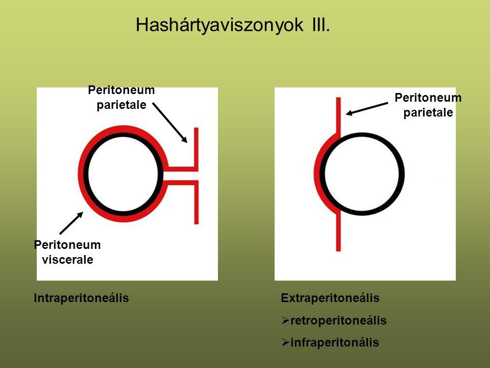 Hashártyaviszonyok III.