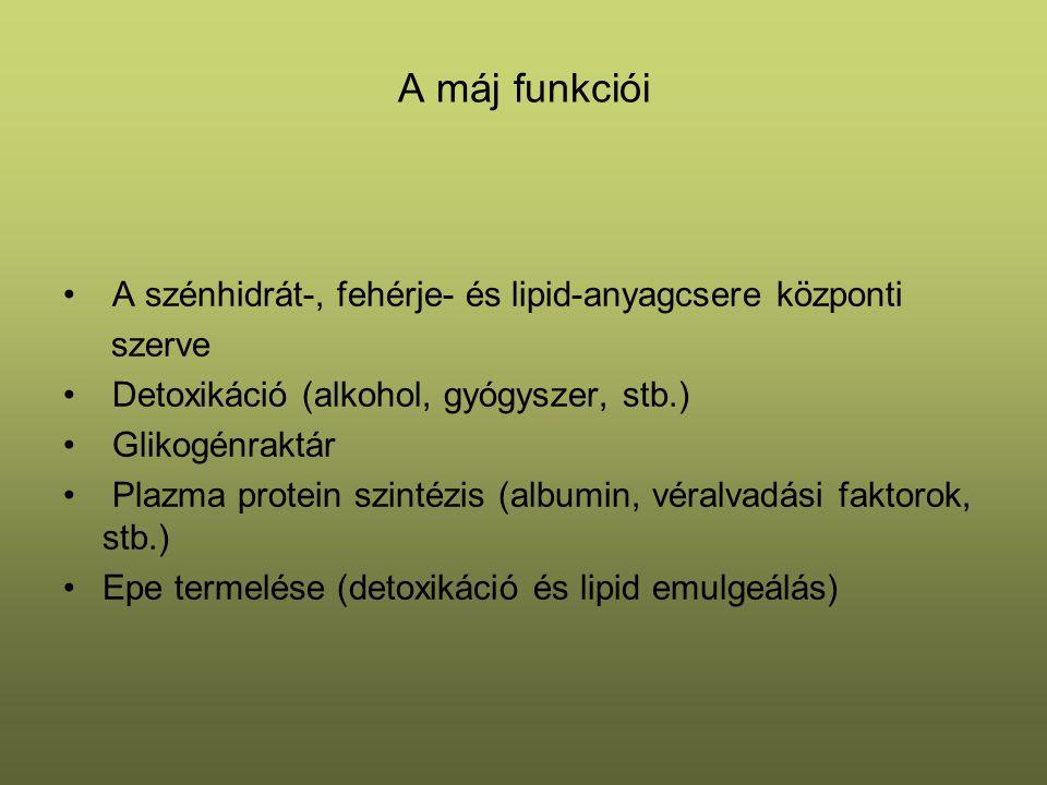 A máj funkciói A szénhidrát-, fehérje- és lipid-anyagcsere központi