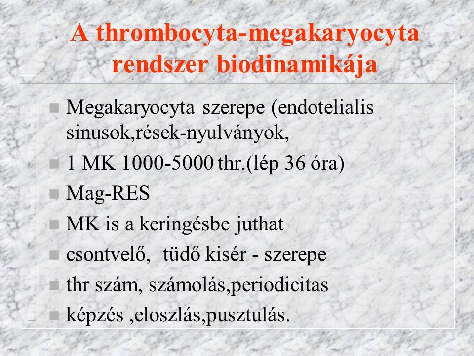 A thrombocyta-megakaryocyta rendszer biodinamikája