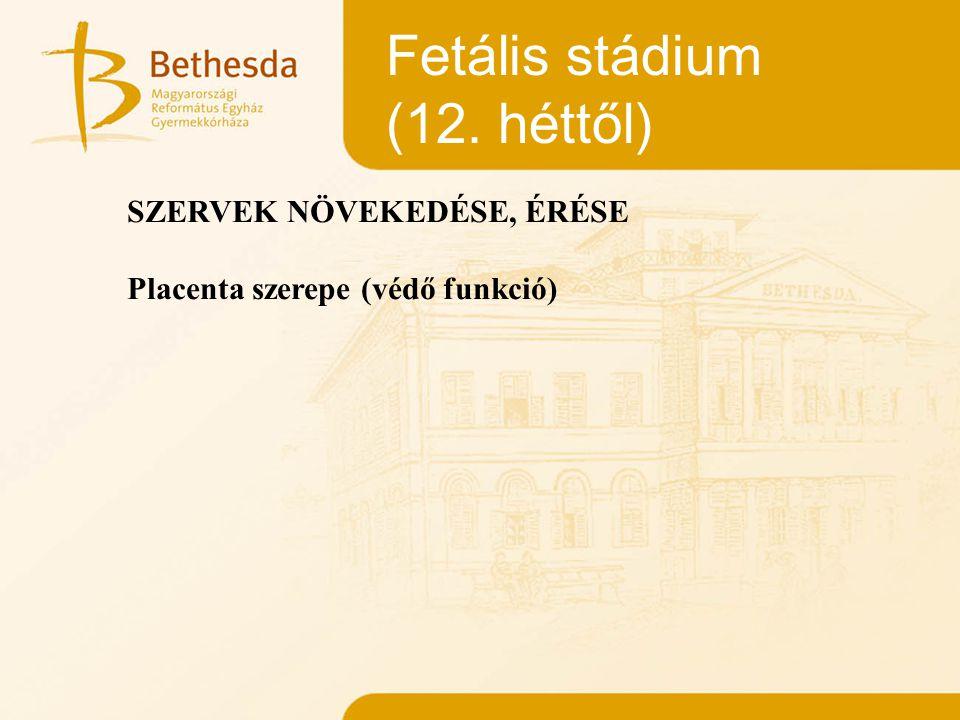 Fetális stádium (12. héttől) SZERVEK NÖVEKEDÉSE, ÉRÉSE
