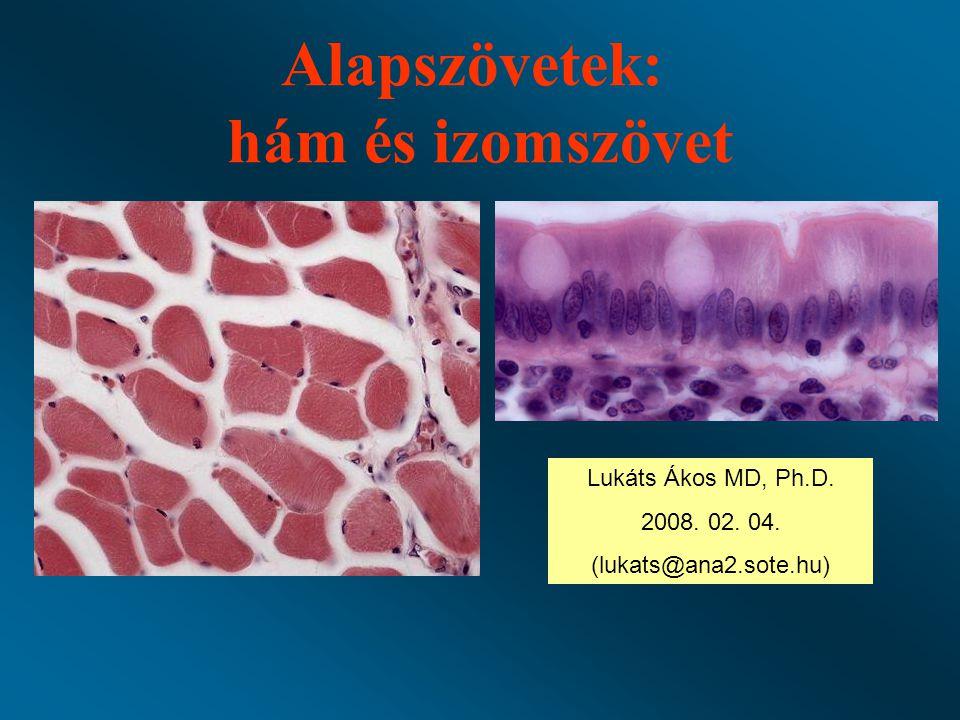 Alapszövetek: hám és izomszövet