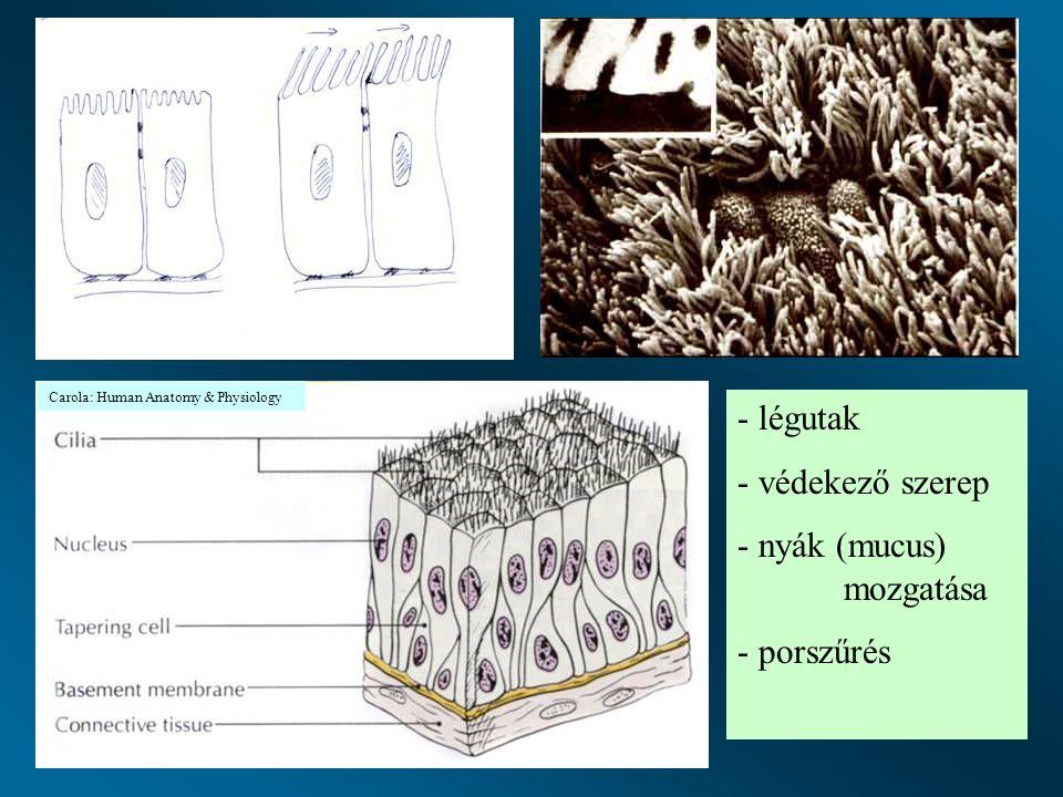 nyák (mucus) mozgatása