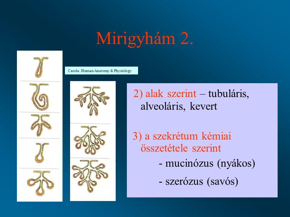 Mirigyhám 2. 2) alak szerint – tubuláris, alveoláris, kevert