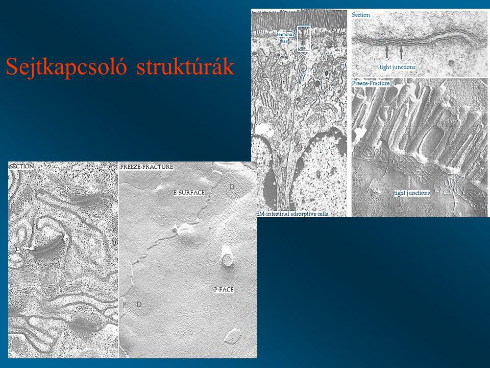 Sejtkapcsoló struktúrák