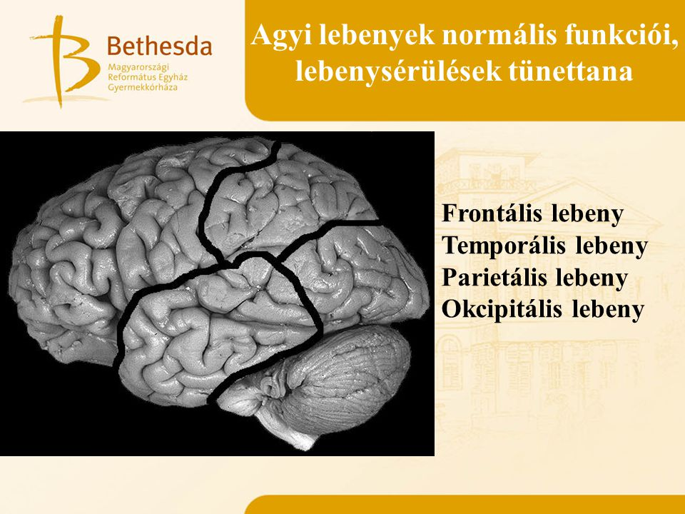 Agyi lebenyek normális funkciói, lebenysérülések tünettana