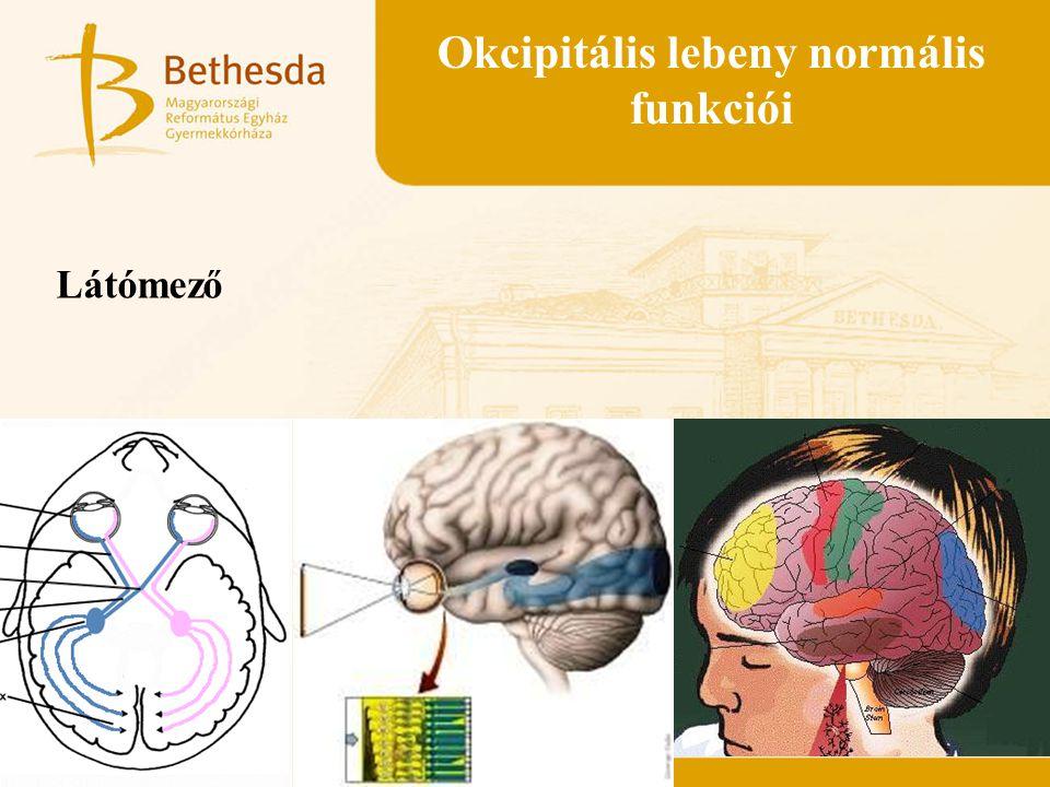 Okcipitális lebeny normális funkciói