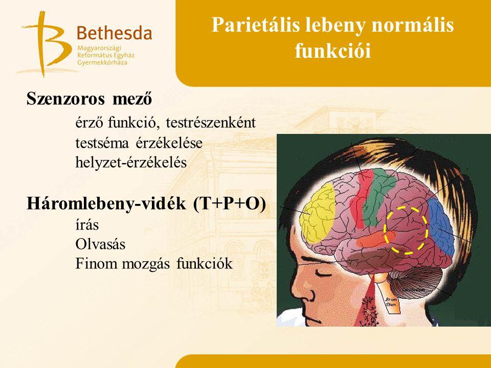 Parietális lebeny normális funkciói