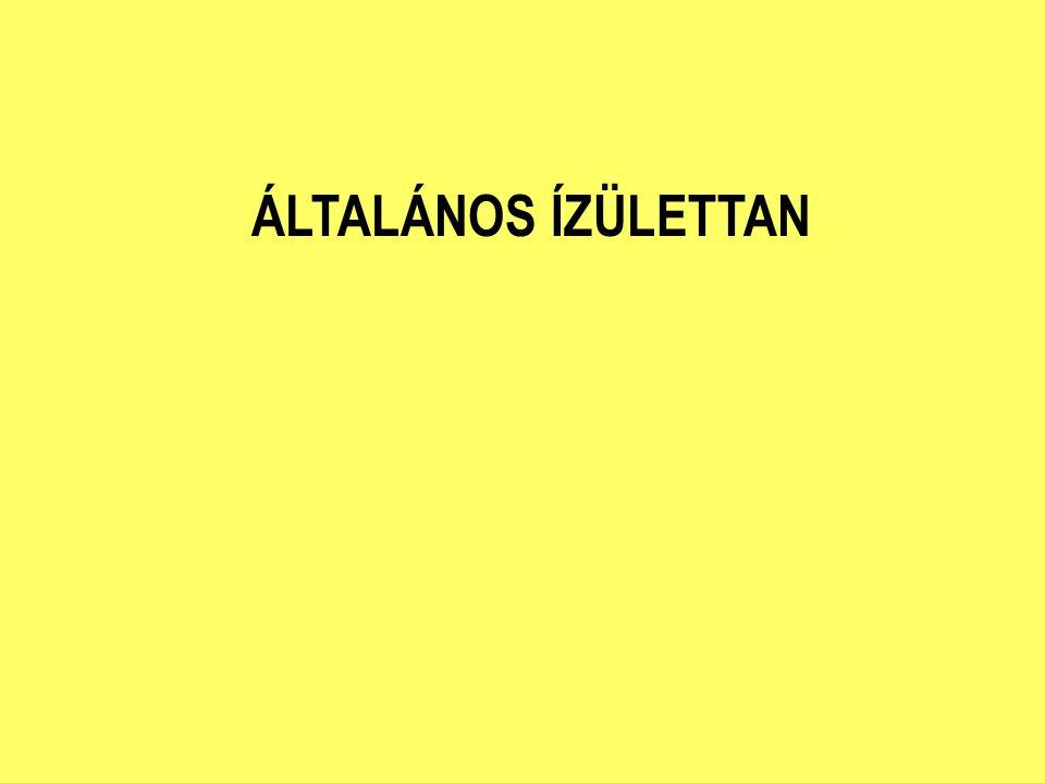ÁLTALÁNOS ÍZÜLETTAN