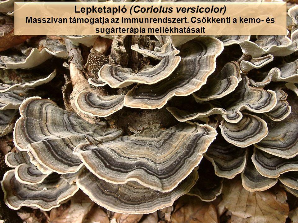 Lepketapló (Coriolus versicolor)