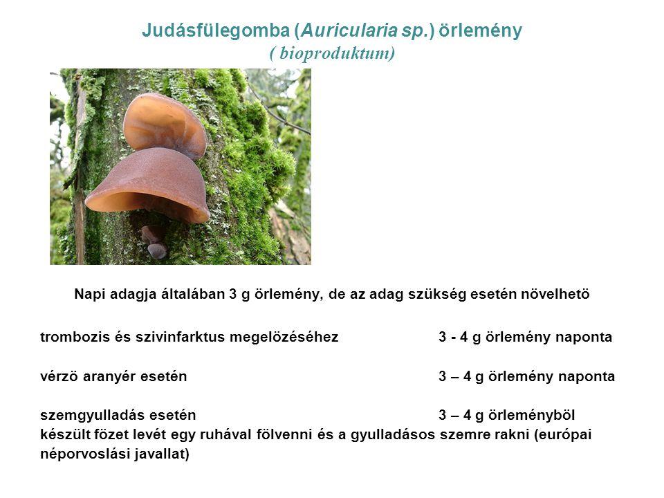 Judásfülegomba (Auricularia sp