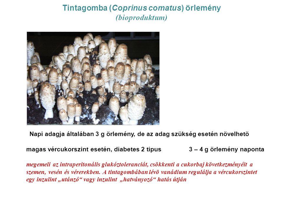 Tintagomba (Coprinus comatus) örlemény (bioproduktum)