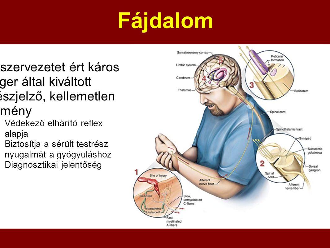 Fájdalom a szervezetet ért káros inger által kiváltott vészjelző, kellemetlen élmény. Védekező-elhárító reflex alapja.