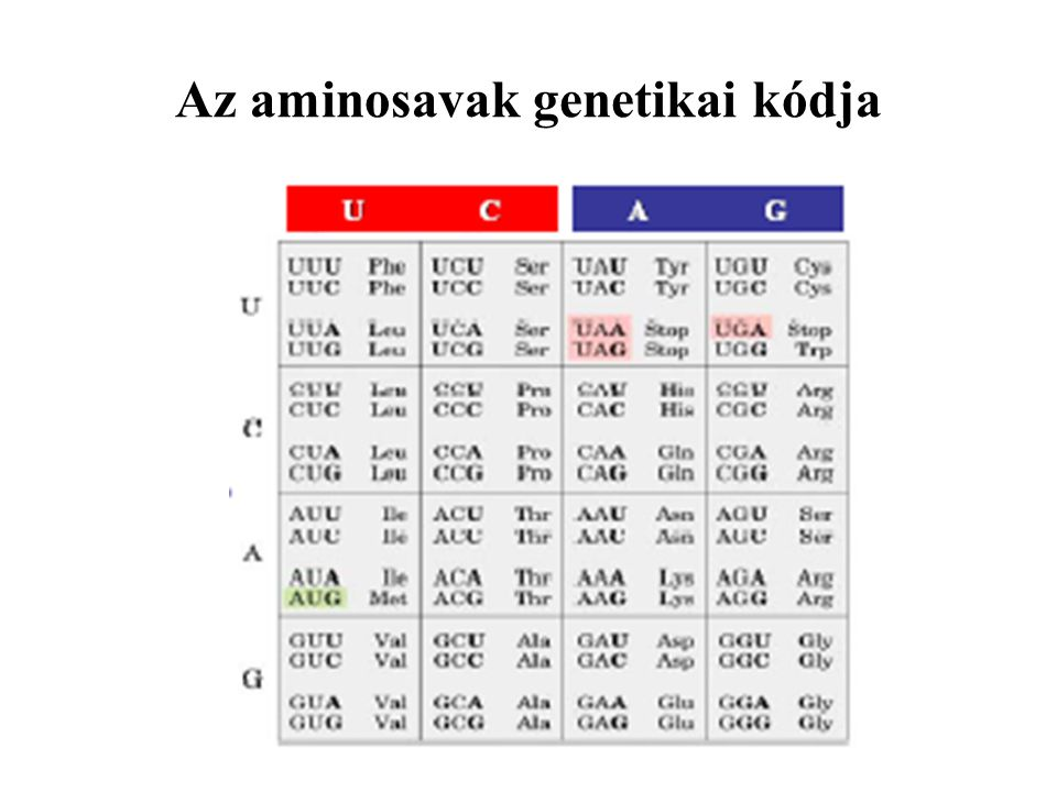Az aminosavak genetikai kódja
