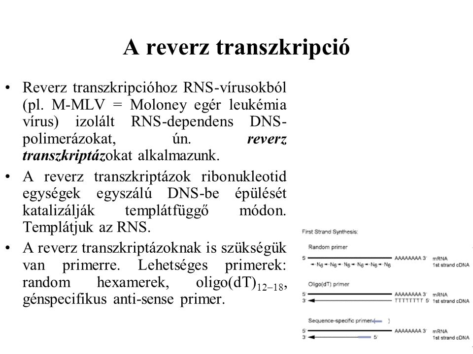 A reverz transzkripció