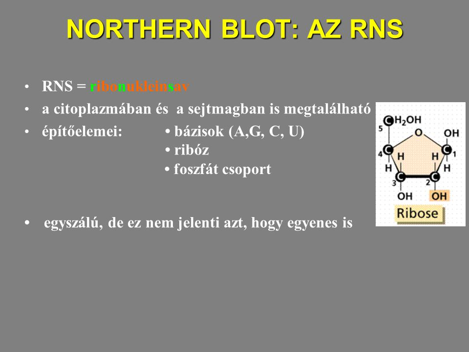 NORTHERN BLOT: AZ RNS RNS = ribonukleinsav