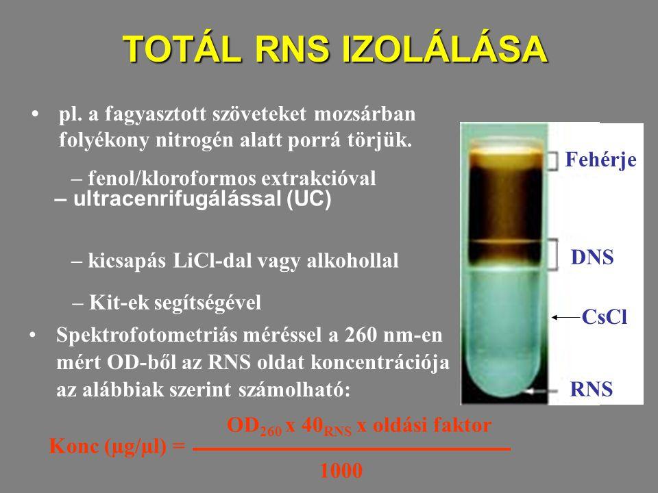 TOTÁL RNS IZOLÁLÁSA • pl. a fagyasztott szöveteket mozsárban folyékony nitrogén alatt porrá törjük.