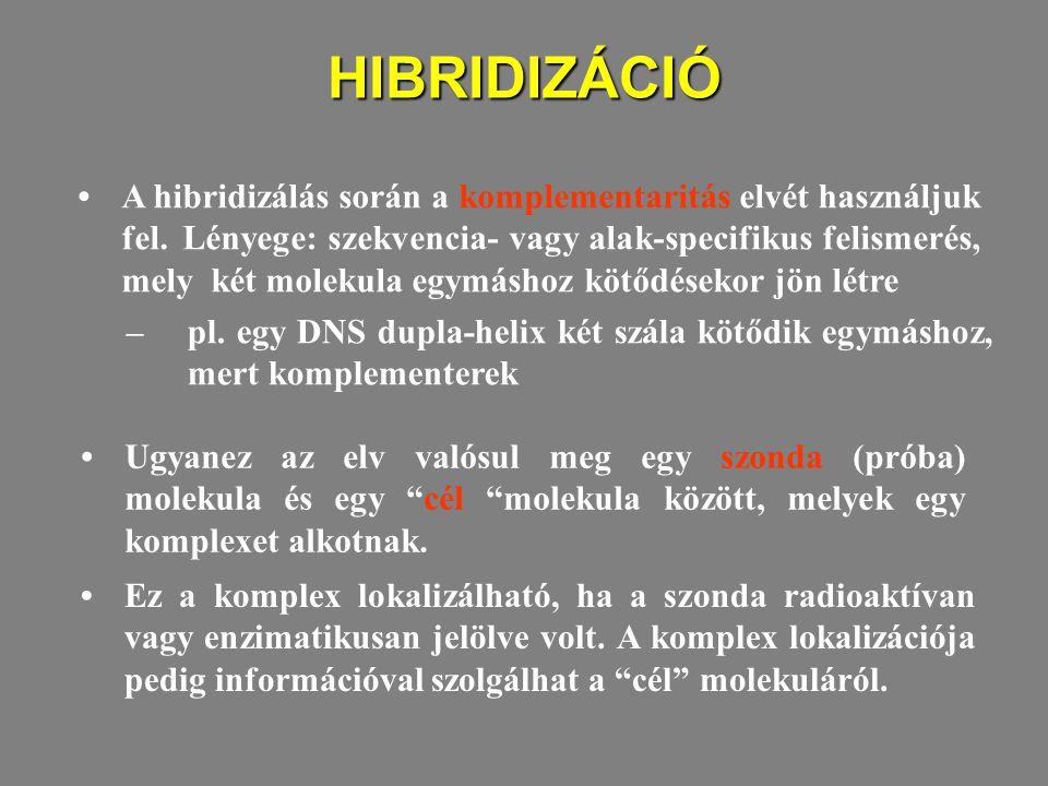 HIBRIDIZÁCIÓ