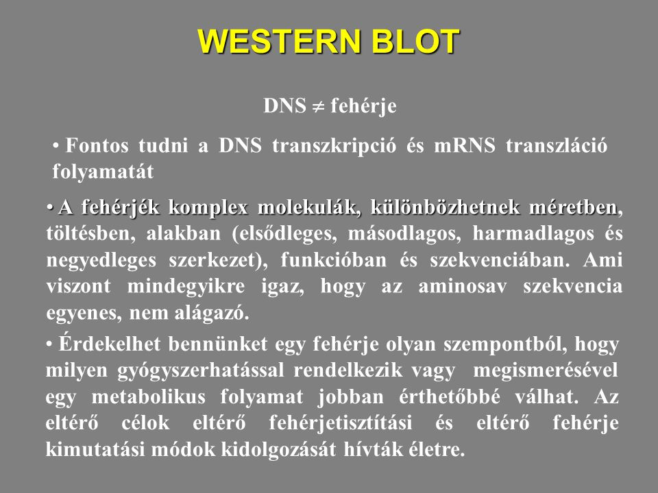WESTERN BLOT DNS  fehérje