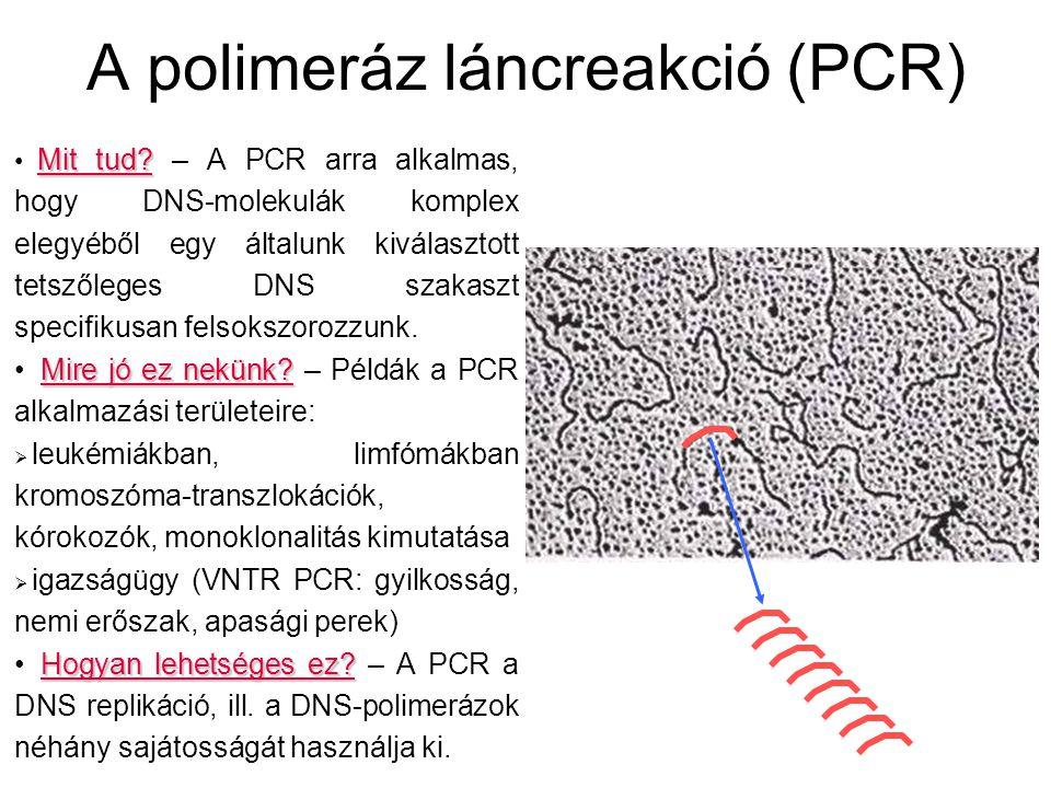 A polimeráz láncreakció (PCR)