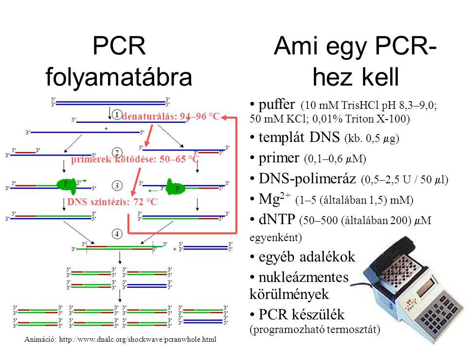PCR folyamatábra Ami egy PCR-hez kell