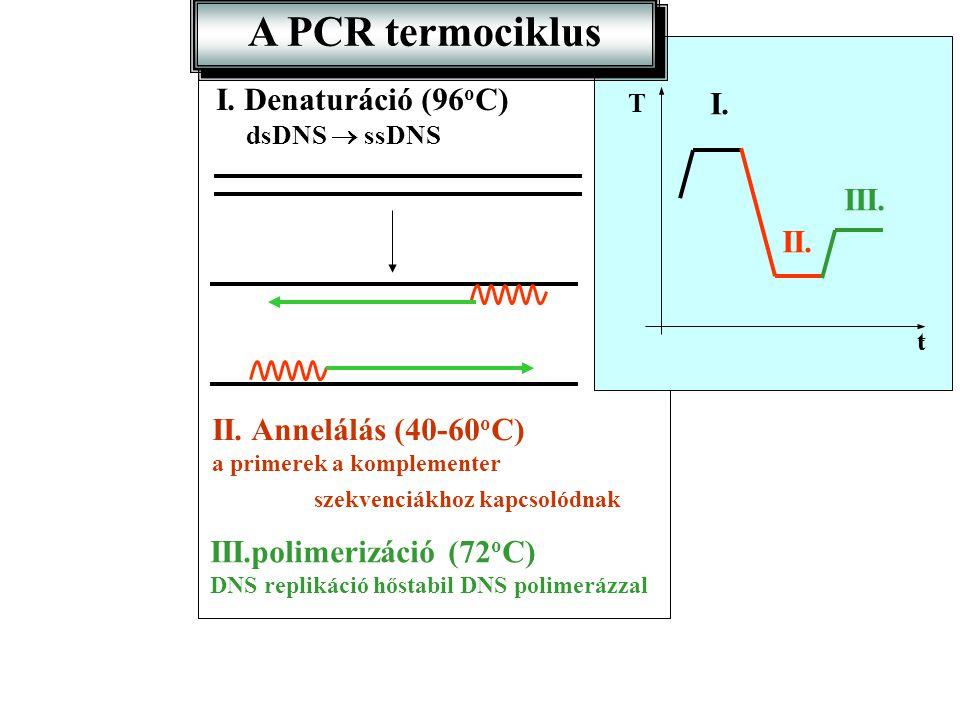 A PCR termociklus I. Denaturáció (96oC) I. III. II.