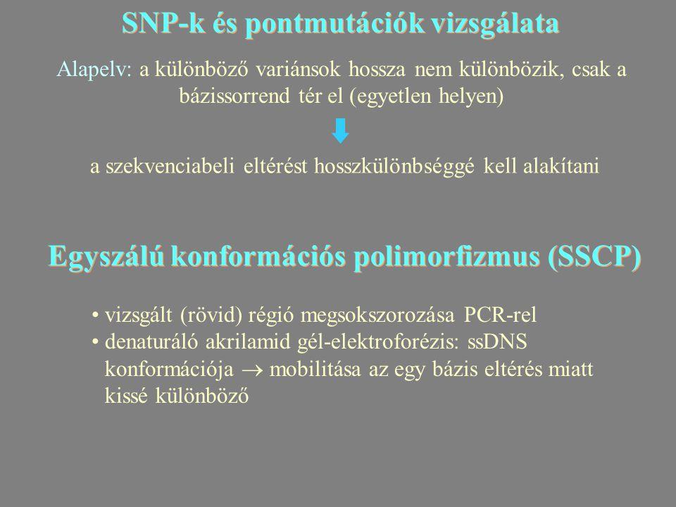 SNP-k és pontmutációk vizsgálata