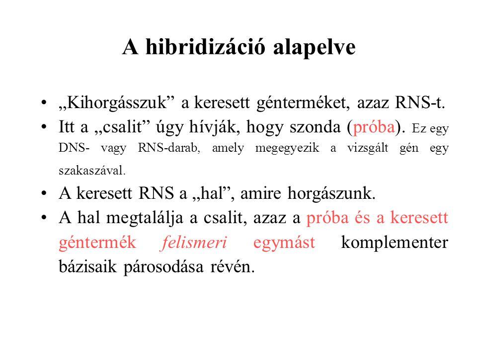 A hibridizáció alapelve