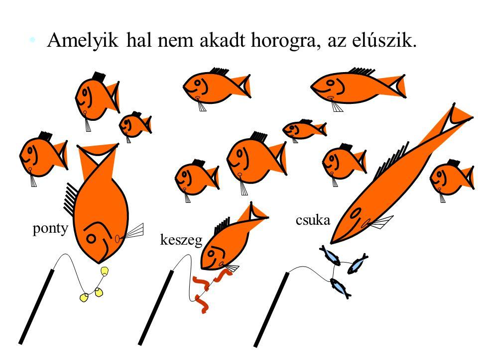 Amelyik hal nem akadt horogra, az elúszik.