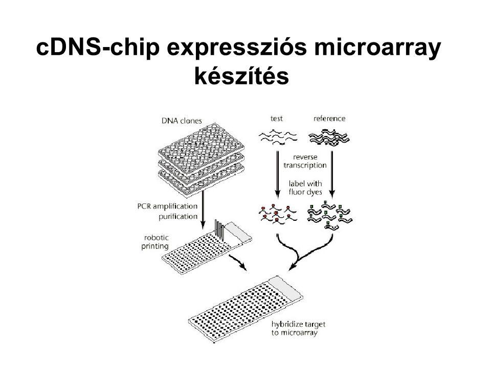cDNS-chip expressziós microarray
