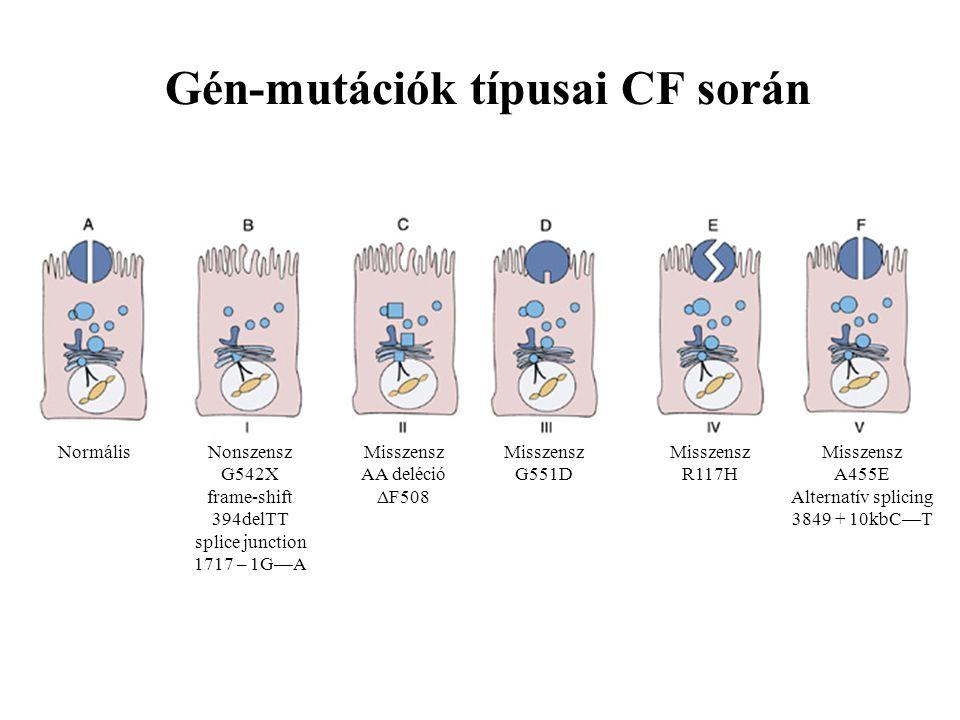 Gén-mutációk típusai CF során