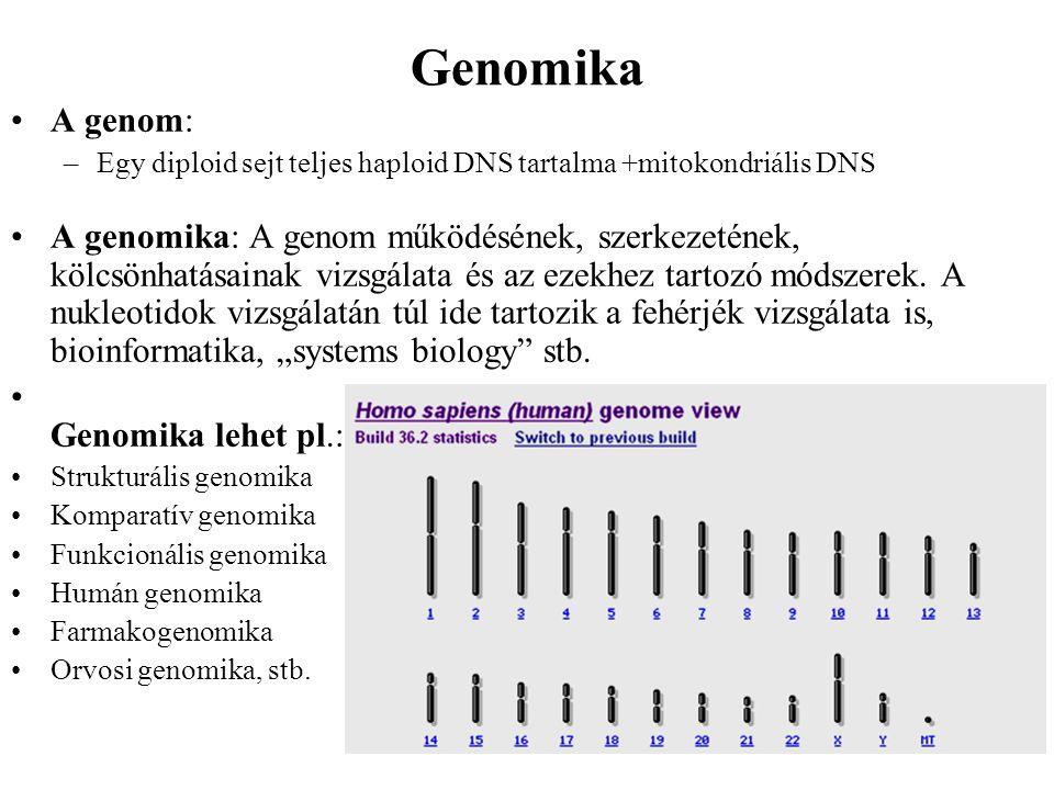 Genomika A genom: Egy diploid sejt teljes haploid DNS tartalma +mitokondriális DNS.
