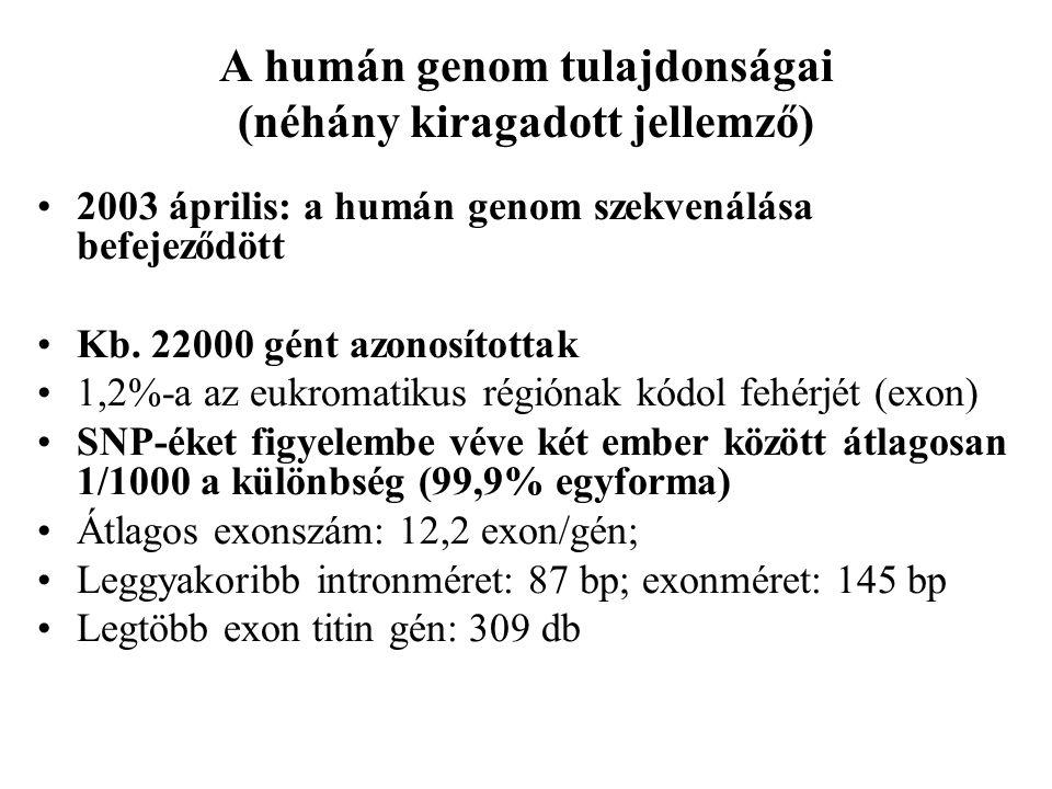 A humán genom tulajdonságai (néhány kiragadott jellemző)