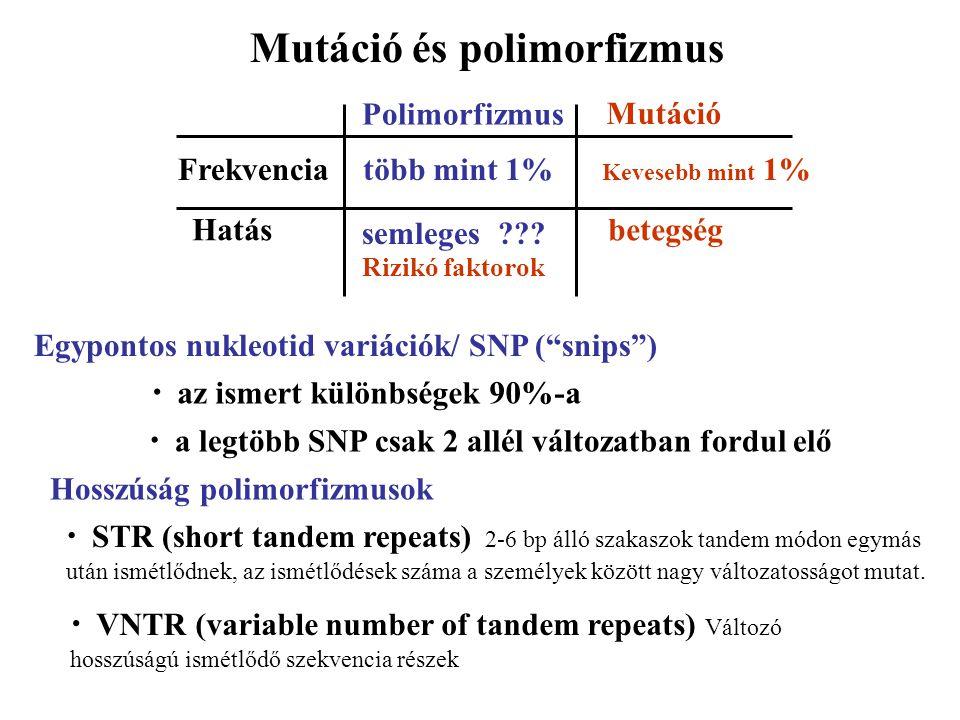Mutáció és polimorfizmus