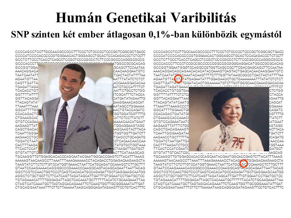 Humán Genetikai Varibilitás
