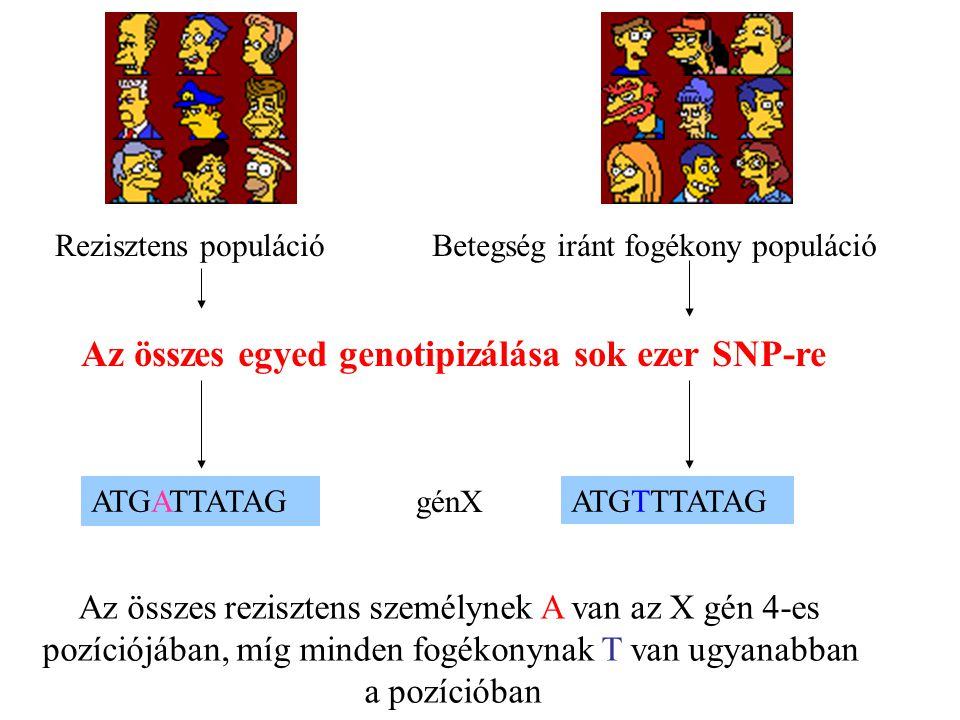 Az összes egyed genotipizálása sok ezer SNP-re