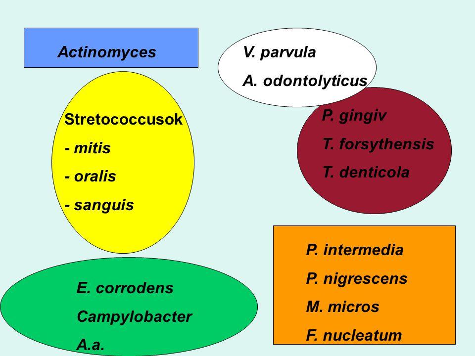 Actinomyces V. parvula. A. odontolyticus. P. gingiv. T. forsythensis. T. denticola. Stretococcusok.