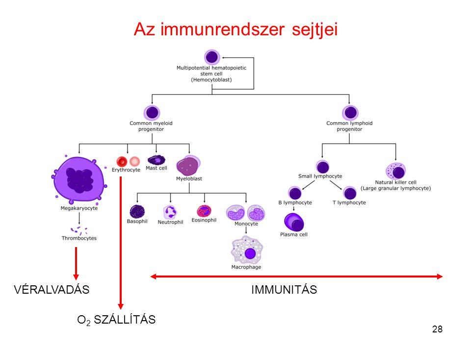 Az immunrendszer sejtjei