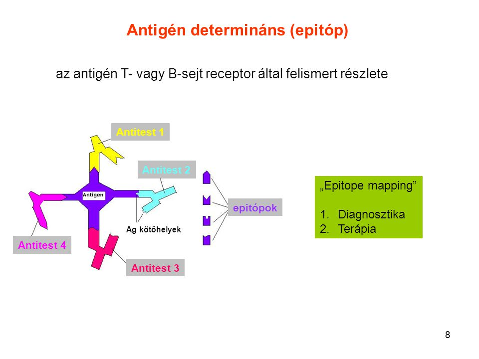 Antigén determináns (epitóp)