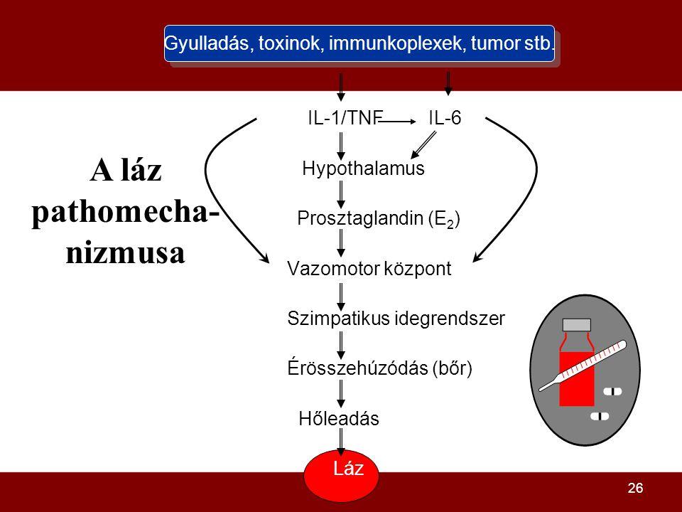 A láz pathomecha-nizmusa