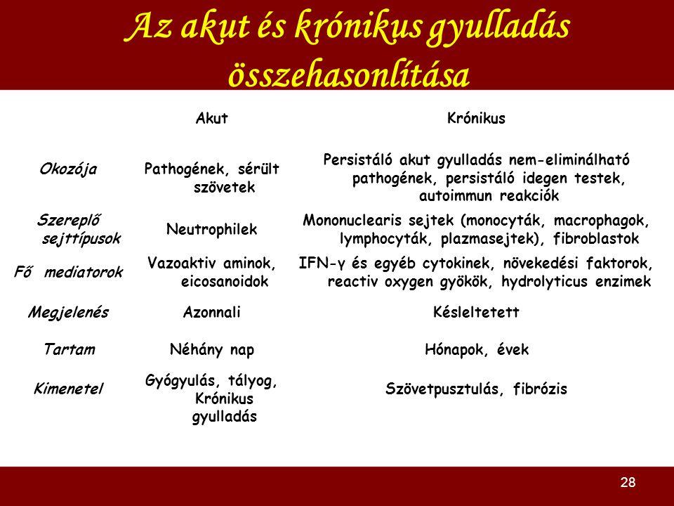 Az akut és krónikus gyulladás összehasonlítása