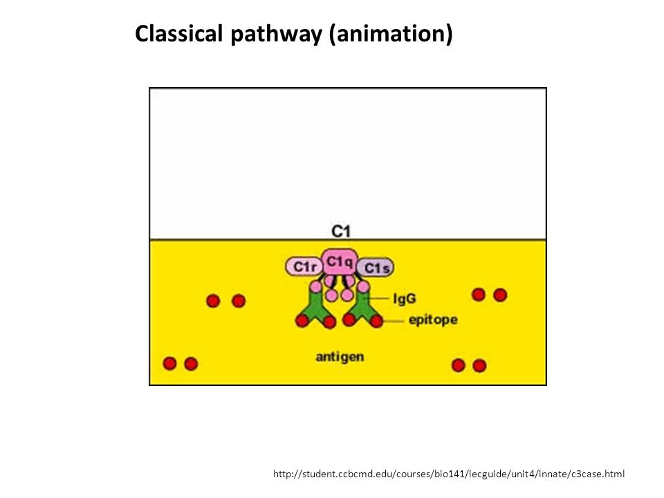 Classical pathway (animation)