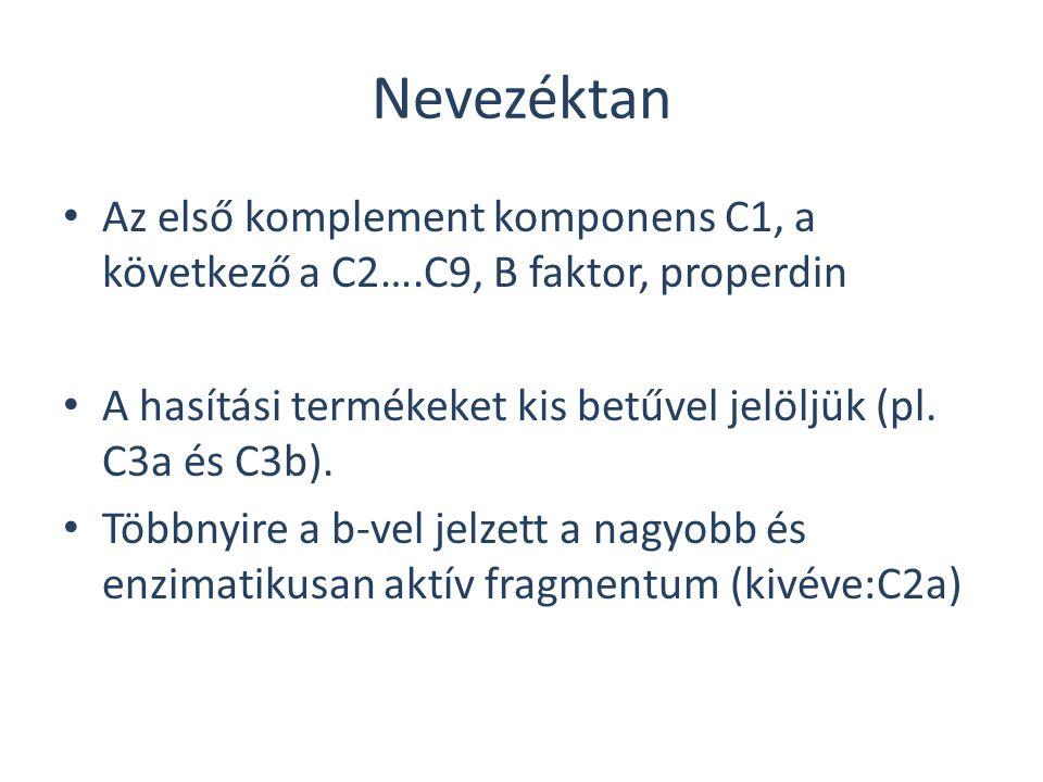 Nevezéktan Az első komplement komponens C1, a következő a C2….C9, B faktor, properdin. A hasítási termékeket kis betűvel jelöljük (pl. C3a és C3b).