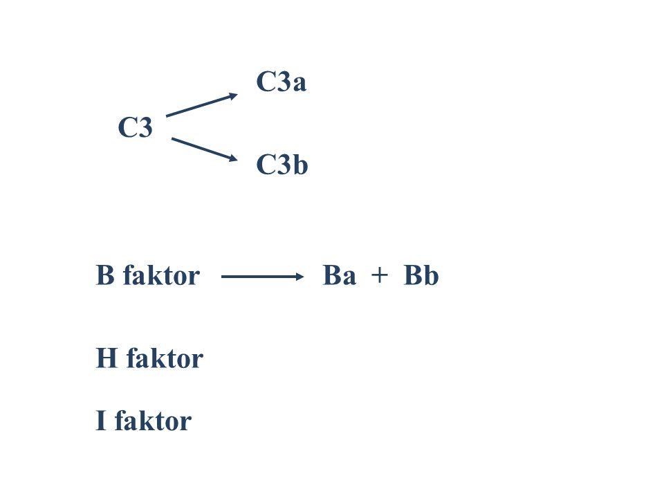 C3a C3 C3b B faktor Ba + Bb H faktor I faktor